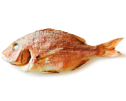 目出鯛の魚紋サンプル
