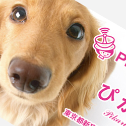 犬・猫・動物名刺